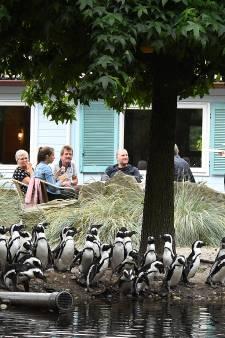 Als de leraren staken biedt ZooParc Overloon de oppas