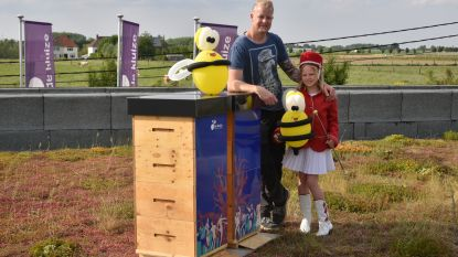 Bijen krijgen nieuwe thuis op dak gemeenschapscentrum