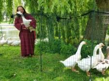 'Ganzenfluisteraar' uit Drenthe vangt vervelende vogels in Deventer