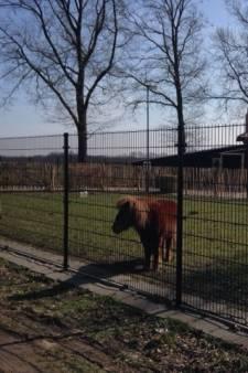 Opening en open dag Buurtboerderij Eersel