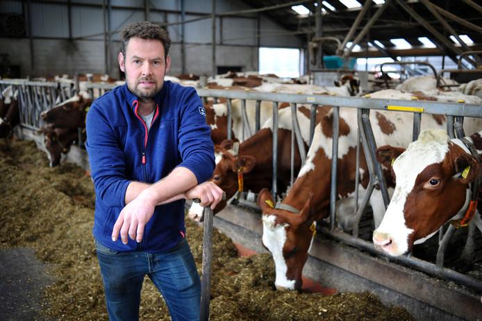 Melkveehouder Walter Truitman tussen zijn koeien in de stal. Foto: Carlo ter Ellen