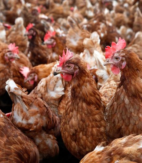 Volgens Wakker Dier 'verspillen' we per jaar 81 miljoen dieren