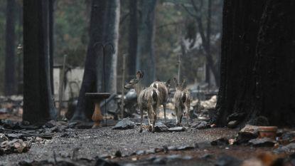Nu al 83 doden bij 'Camp Fire' in Noord-Californië