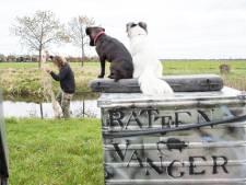 Rattenvanger Andor werkt niet met gif, maar met twee honden en negen fretten