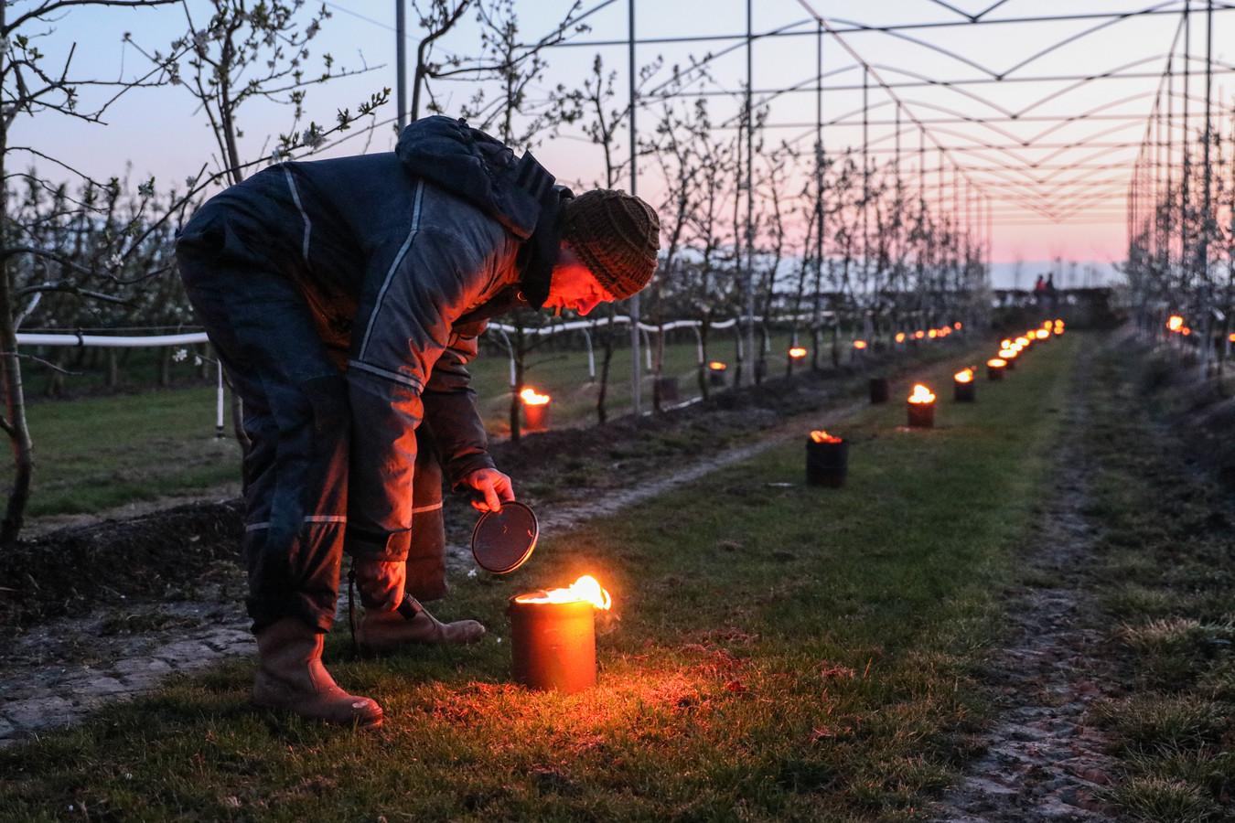 Luttelgeest - Fruittelers in het hele land zitten deze dagen in spanning. De boeren proberen de bloesem van hun gewassen te beschermen, want als de knoppen kapotvriezen, loopt de schade al snel in de tienduizenden euro's.