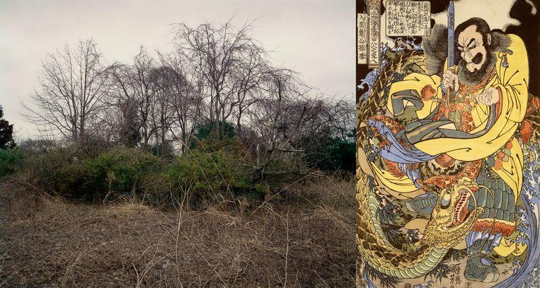 Foto's van de postnucleaire natuur in Fukushima, zij aan zij in Tree and Soil met oude Japanse prenten. Beeld Tree and Soil