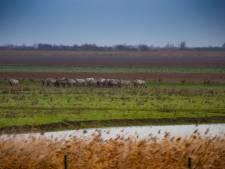 Actievoerder Oostvaardersplassen veroordeeld voor smaad tegen directie Staatsbosbeheer