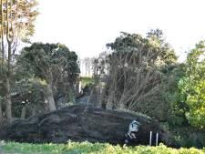 Regio gebukt onder harde wind: stroomuitval, vallend glas en omgewaaide bomen
