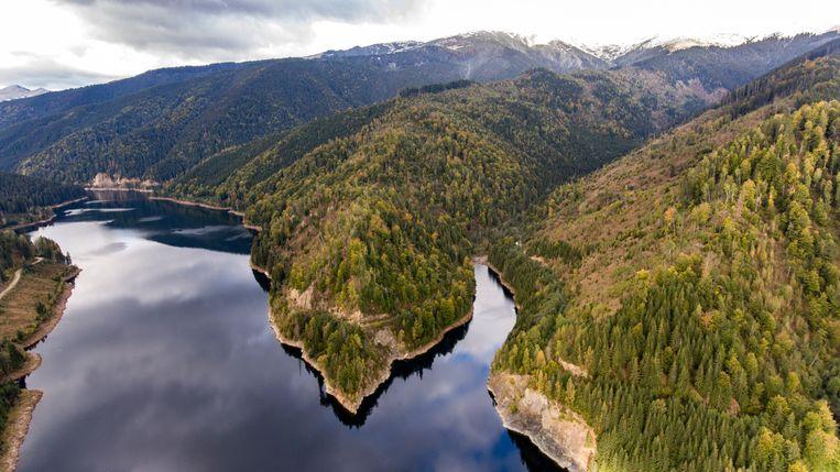Het Pecineagumeer in de Dimbovitavallei. Beeld Julius Schrank