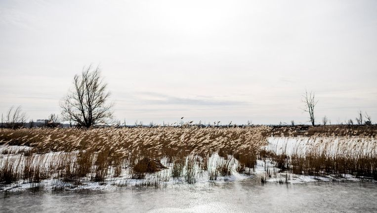Bevroren sloot in het natuurgebied van Staatsbosbeheer in de Flevopolder. Beeld null
