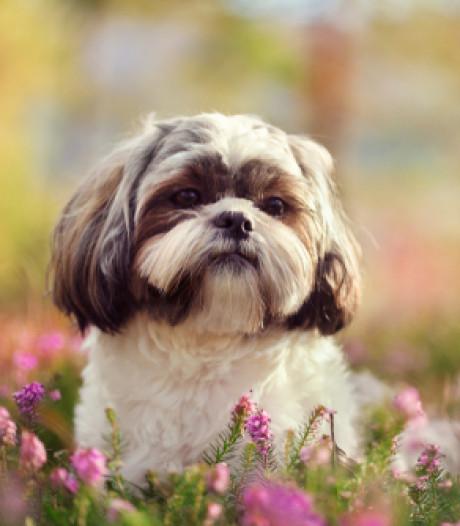 Gezond hondje ingeslapen als laatste wens van overleden baasje