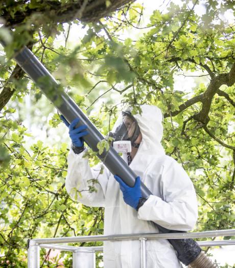 Liemers zuigt lege nesten eikenprocessierups uit de bomen