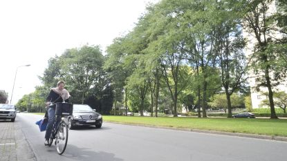 """Werken aan fietspad Fruithoflaan van start: """"Aan waardevolle bomen wordt niét geraakt"""""""
