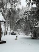 De kerstkaart voor 2018 is gemaakt, zegt Corrie van Berkel uit Keldonk, die dit winters plaatje naar ons stuurde!