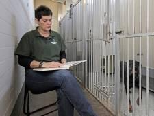 Dierenasiel Oss leest voor aan honden en katten: 'Ze worden er écht rustiger van'