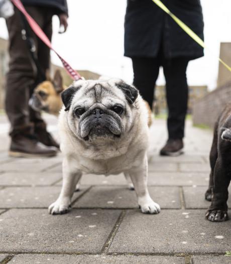 Hondenuitlaatstrook in Gendt wordt verplaatst