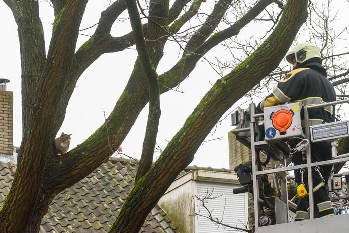 De brandweer kon met de hoogwerker niet dicht bij de kat komen.