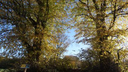 Honderd jaar oude bomen vertellen hun oorlogsverleden