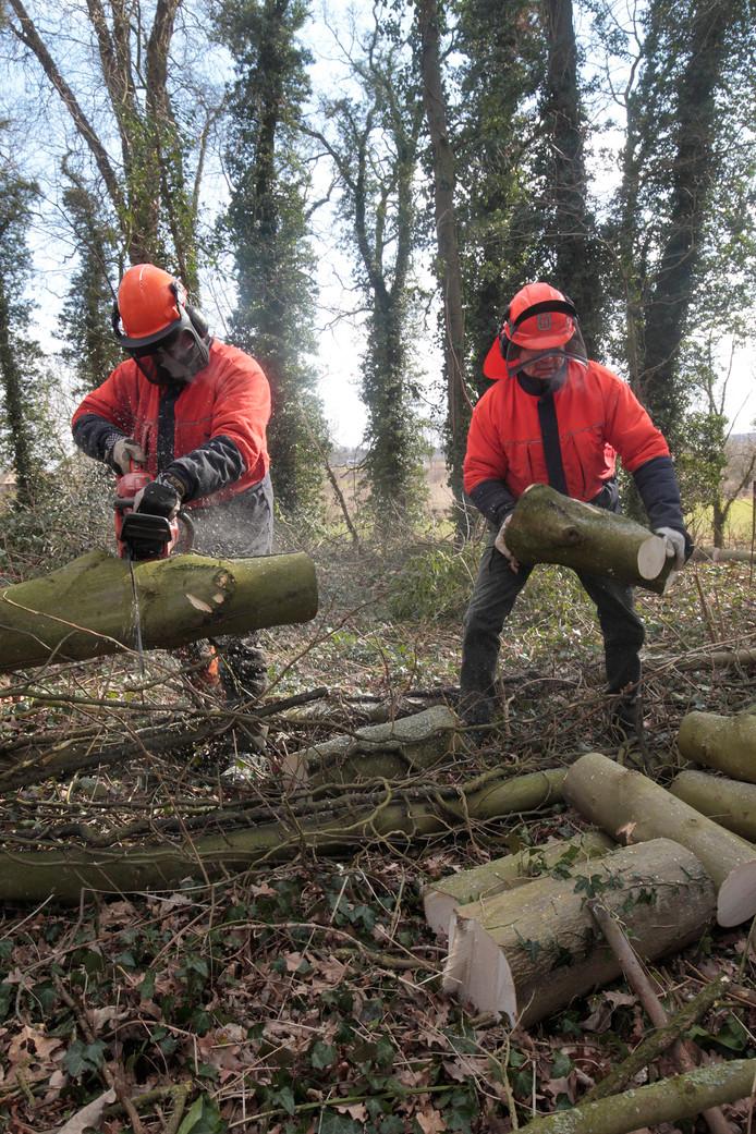 Bosbouwers bezig met het omzagen van bomen in Bronkhorst. De acties tegen bomenkap worden steeds harder in de Achterhoek. Bij deze operatie waren geen actievoerders aanwezig. Foto Theo Kock