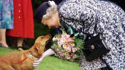 """Queen rouwt om dood van allerlaatste Corgi: """"Het verlies van een hondje valt haar altijd heel zwaar"""""""