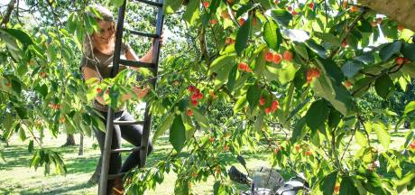 'Nederland is een goudmijn voor lekker eten en mooie producten'