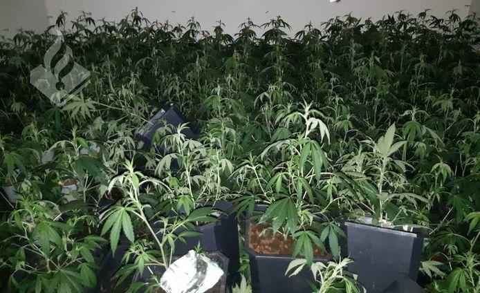 Het betrof een kwekerij met 207 planten.