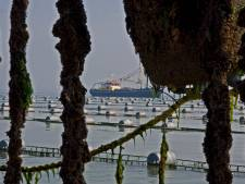 Zeilers zijn opgelucht: extra mosselinstallaties op de Oosterschelde liggen niet in de weg