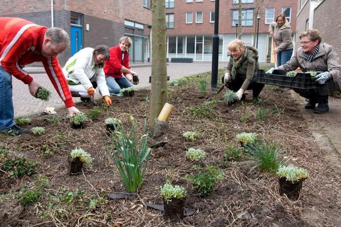 Bewoners van de Raambuurt hebben zaterdag hun buurt opgefleurd. Openbare perkjes zijn voorzien van extra planten en de bewoners hebben gezorgd voor grote plantenbakken in de Bergpoortstraat.foto Ronald Hissink