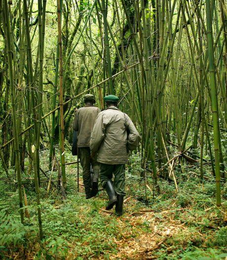 Zes parkwachters gedood in natuurpark Congo, waar Belgische prins directeur is