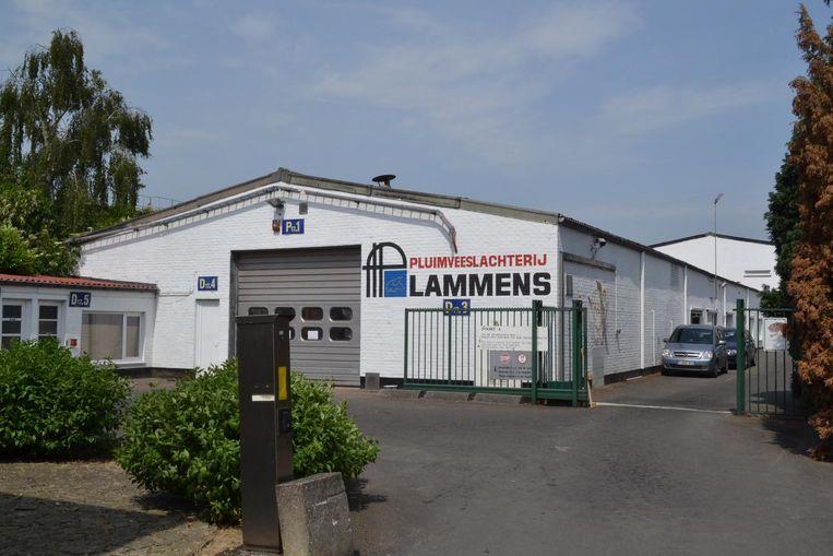 Drie weken geleden werd pluimveeslachterij Lammens ook al eens slachtoffer van een opmerkelijke kraak.