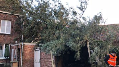 PER PROVINCIE: zo hard werd uw regio getroffen door de storm