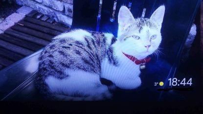 Vermiste kat en baasje twee weken na zware crash herenigd
