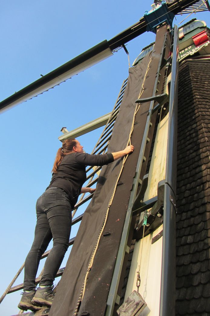 Molenaar Carolien Pikkemaat druk aan het werk.