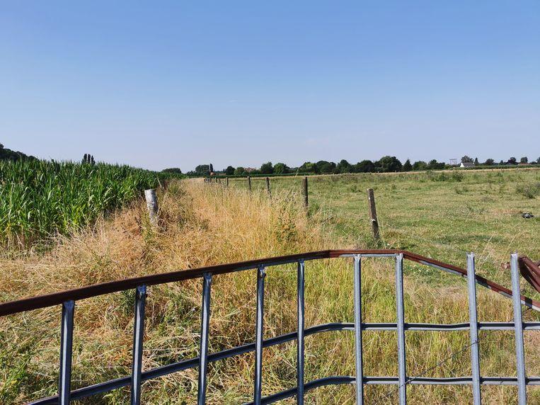 De vermeende buurtweg is momenteel afgesloten om de koeien doorgang te verlenen. Een reden voor vandalen om toe te slaan?