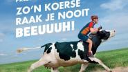 KOERS KORT (31/12). Organisatie Nokere Koerse pakt uit met nieuwe spraakmakende affiche - Wellens vijfde in Mallorca, Landa breekt sleutelbeen -  Vier Belgische teams krijgen wildcard voor Omloop