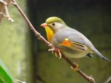 Illegale vogelhandelaar (35) bood 'talloze' exotische exemplaren aan in Zwolle: 'Ik ga de bushbush niet in'