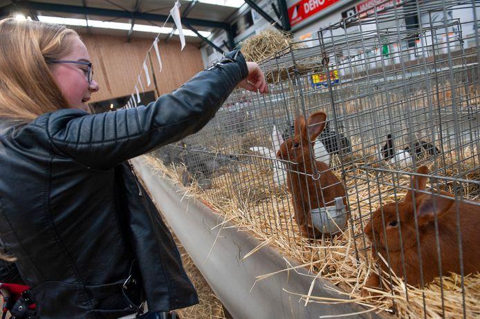 Lindsay Verhoofstad uit Waalwijk is een echte konijnenvriend.