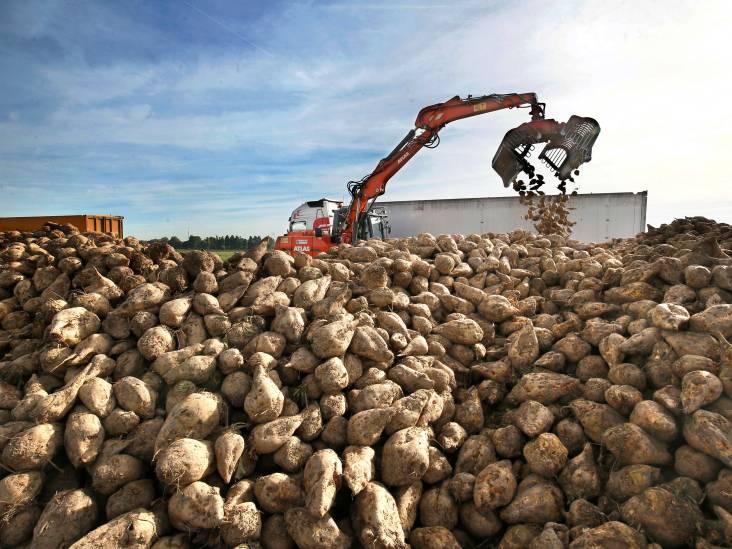 'Suikerbieten op de weg: waarom zijn volle vrachtwagens niet afgedekt?'