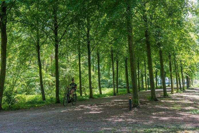 De lindes aan de IJsweg in Beek en Donk worden in 2021 wellicht uitgedund.