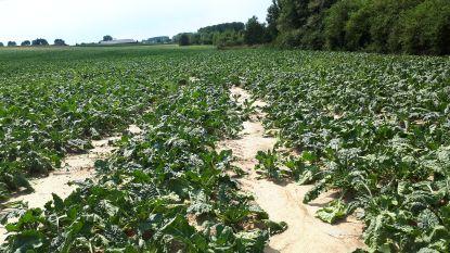 Oproep aan land- en tuinbouwbedrijven: geef schade door droogte aan bij de gemeente