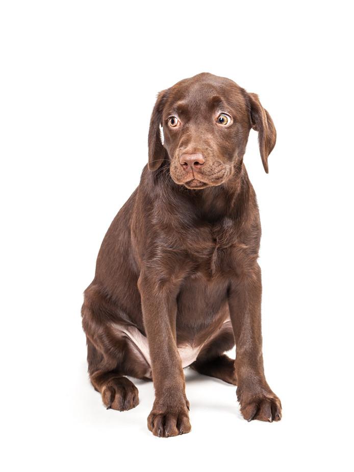 Een bange hond. Foto ter illustratie.