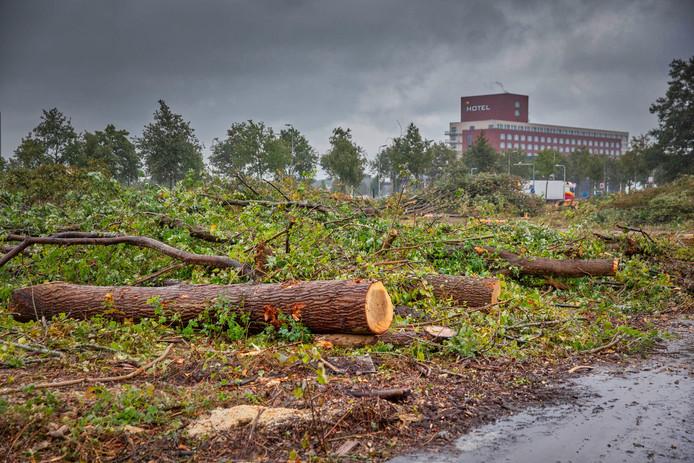 Deze bomen moeten wijken voor de nieuwe weg die er komt te liggen. Voor alle gekapte bomen, komt op een andere plek een boom terug.