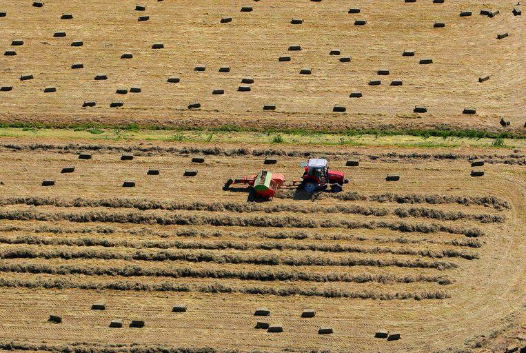Een boer is bezig hooibalen te maken. Beeld anp