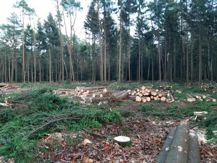 Aan het begin van de Toeristenweg aan de Nijverdalse kant zijn tientallen fijnsparren gekapt.