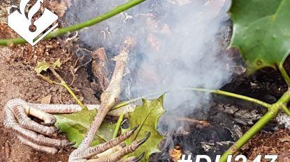 Dakloze legt beschermde blauwe reiger op de barbecue