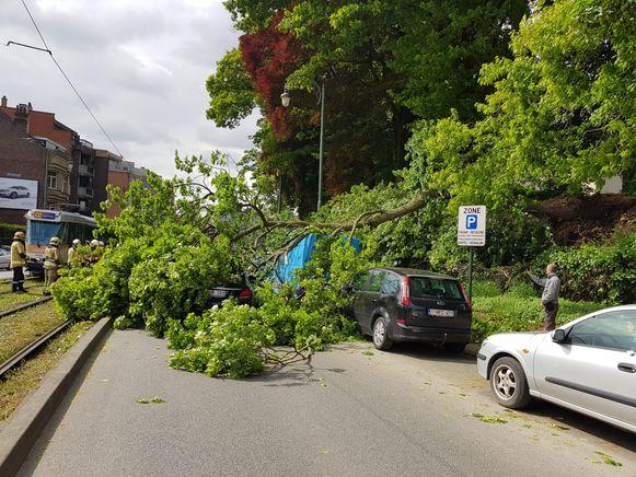 De geparkeerde bestelwagen brak de val van de boom.