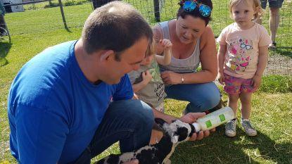 VIDEO. Lammetjes genieten van knuffels en pap bij Het Vaneleke