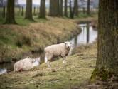 20 april: Lentewandeling in Aardenburg en Heille