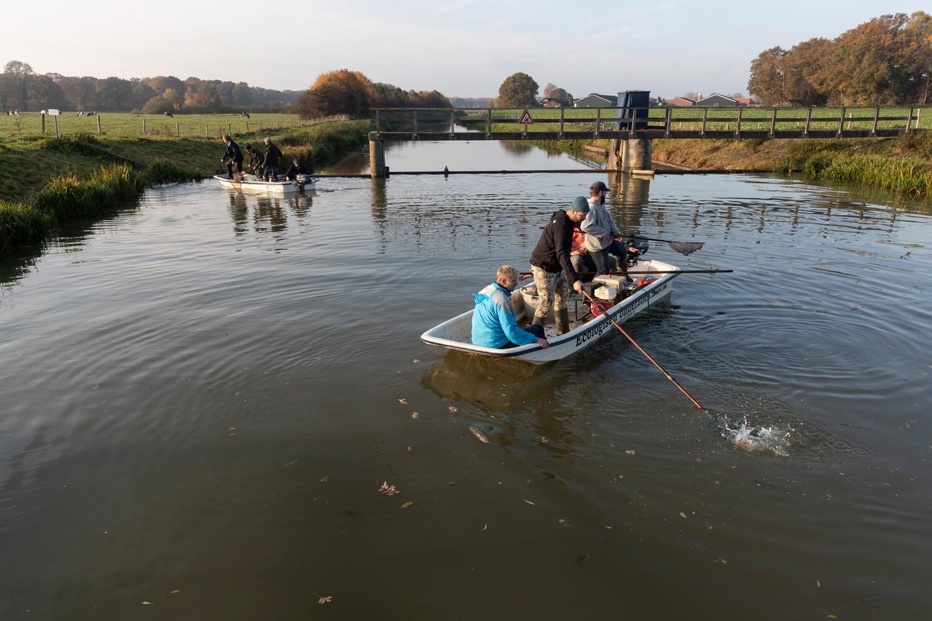 Sportvissers proberen nog levende vissen uit de Berkel te redden.