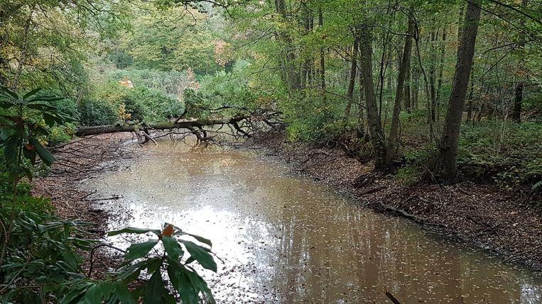 Het begin van de afwateringsgracht nog voor de dammetjes die stuk werden gemaakt.